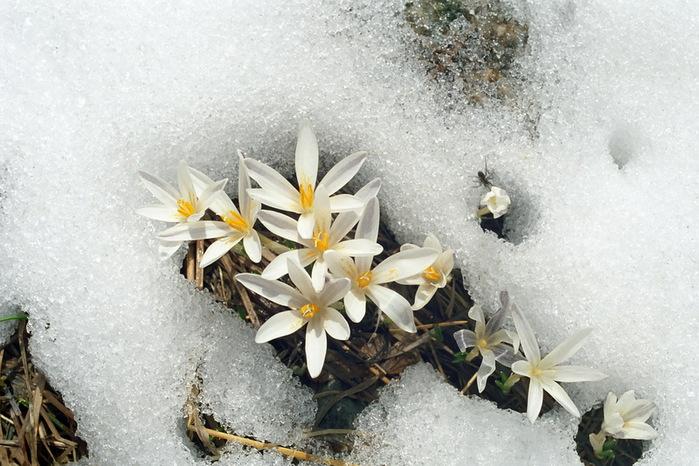 Где зима встречается с весной 69120c0ad4f3 (700x466, 134Kb)