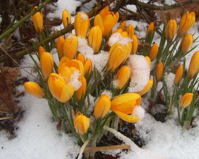 Где зима встречается с весной motto.net.ua-43498 (700x560, 218Kb)