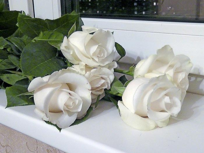 розы на окне фото