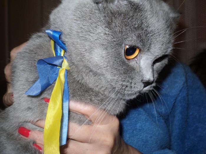 майдан киев украина кошки