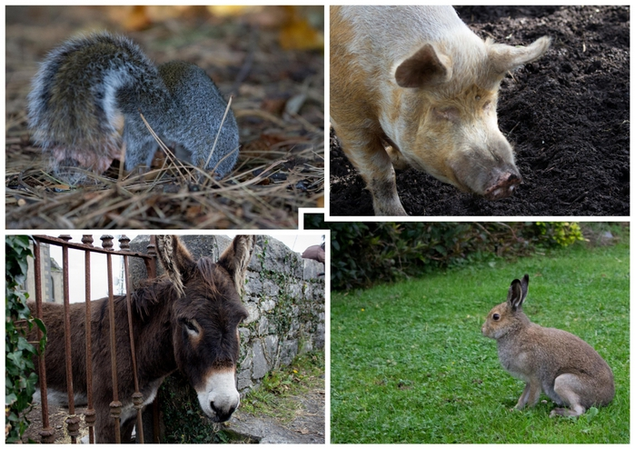965553_Ireland_animals_201521 (700x494, 317Kb)