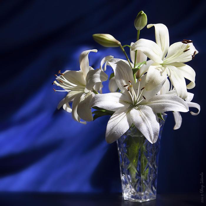 мансардой картинки черная лилия в вазе комментариях