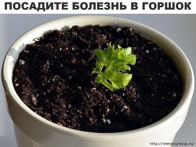 https://img0.liveinternet.ru/images/attach/c/10/127/585/127585546_4121583_.jpg