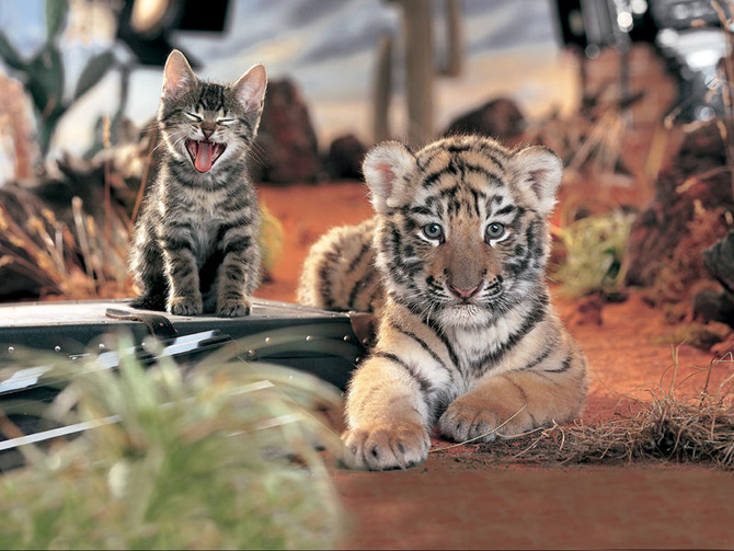 Adorable Babies of Wild Cats_ (8) (670x503, 132Kb)