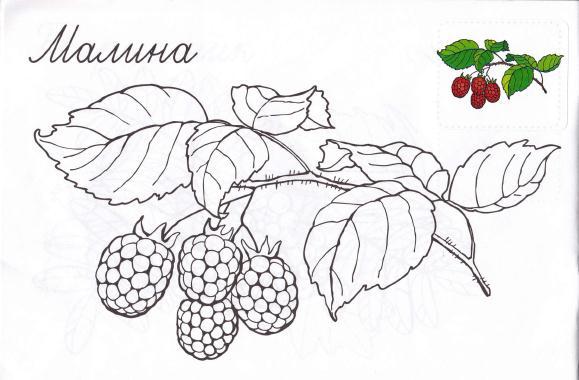 Раскраска. Грибы и ягоды. Обсуждение на LiveInternet ...