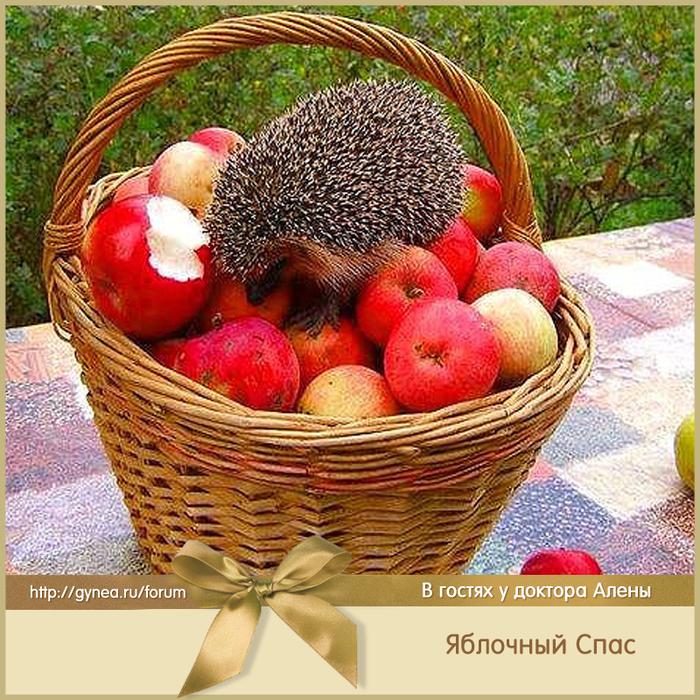 Открытки яблоки доброе утро, анимашки картинки приколы