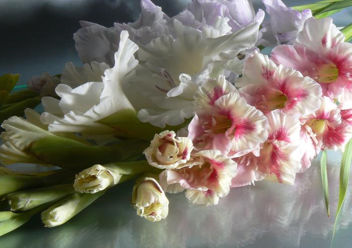 первом этапе открытки цветы гладиолусы яркие, красочные картинки