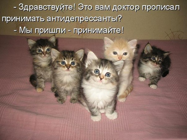https://img0.liveinternet.ru/images/attach/c/11/116/186/116186572_0.jpg