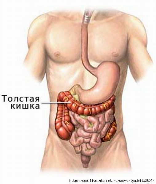 colon_anatomy_03 (507x600, 91Kb)