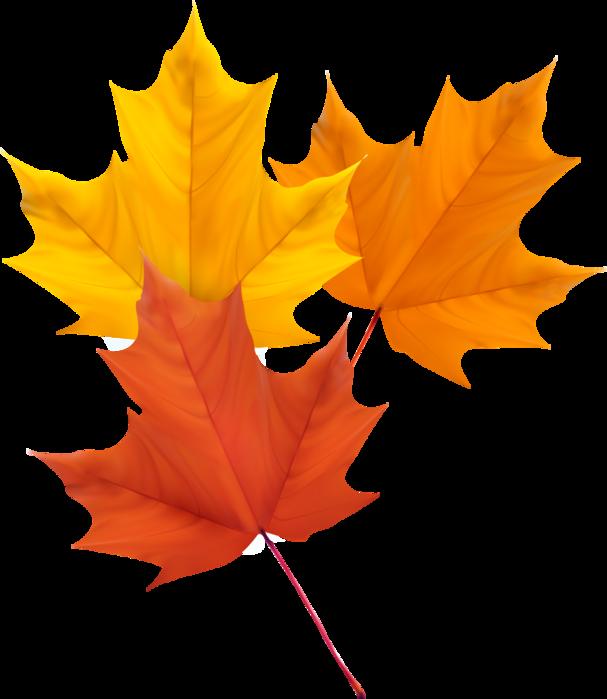 """Результат пошуку зображень за запитом """"листочки осінь пнг"""""""