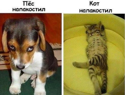 правда жизни кошки собаки