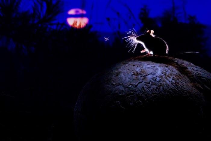 Мышка и ночь