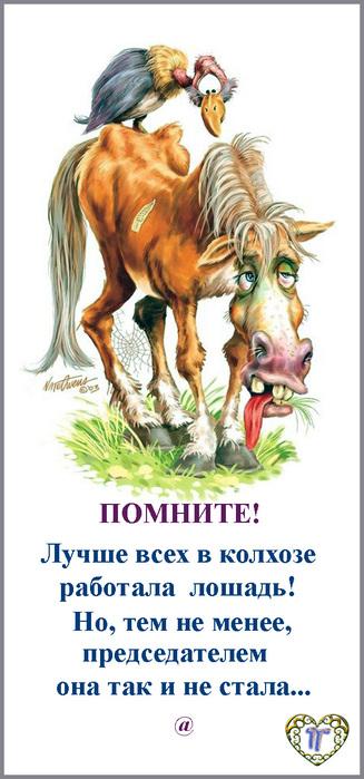 скандальная открытка про лошадь которая не стала председателем это