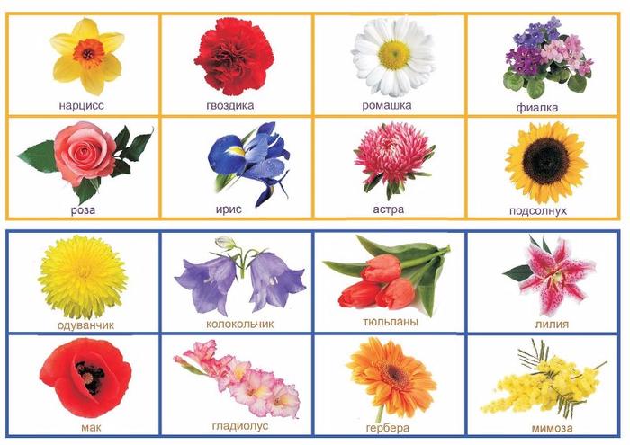 Картинки садовых цветов и их название