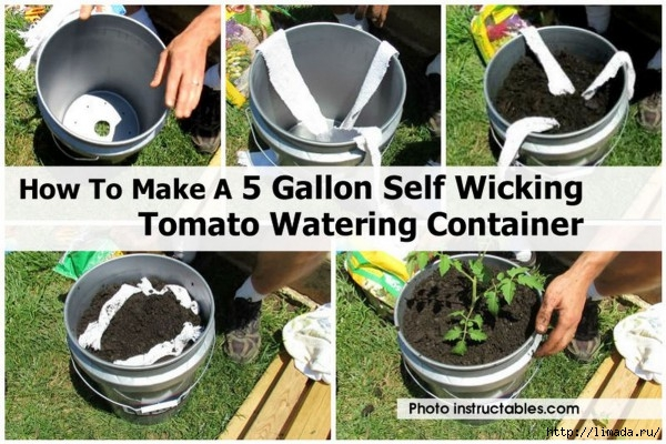 How-To-Make-A-5-Gallon-Self-Wicking-Tomato-Watering-Container-e1435260549534 (600x400, 210Kb)