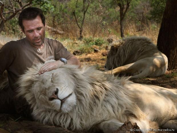 Кевин Ричардсон играет с белыми львами