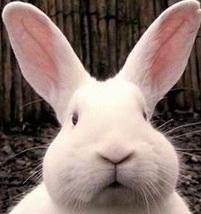 Кролик и секс