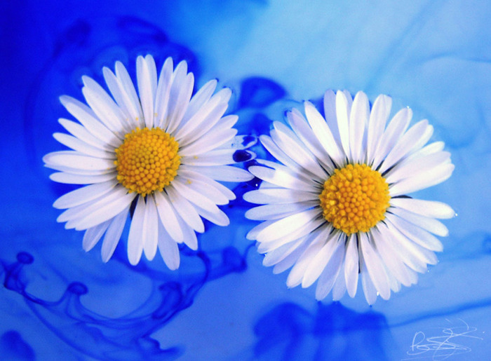 В мире цветов я желала б остаться)) ч. 2