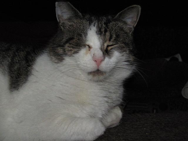 Мои коты))) 1298658004_IMG_0043 (640x480, 80 Kb)