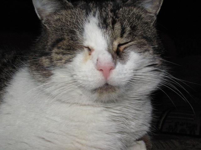 Мои коты))) 1298657985_IMG_0042 (640x480, 101 Kb)
