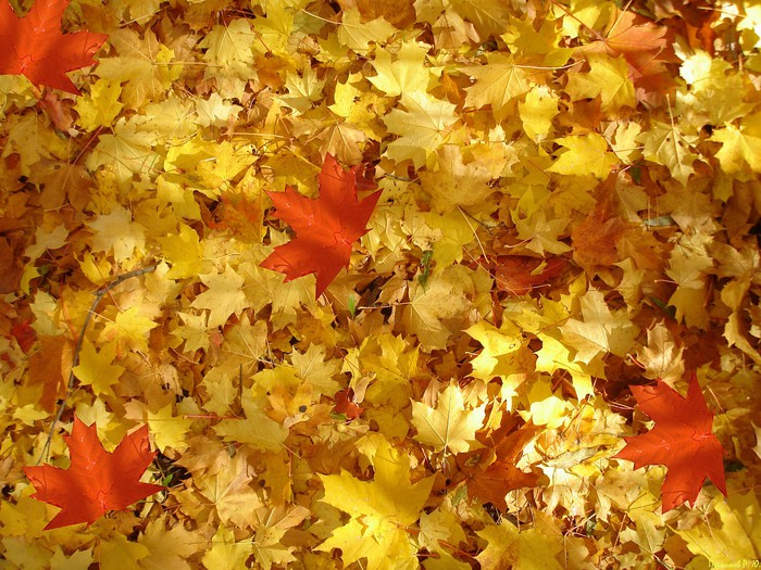 сханукой ханукапоздравления день шуршания листьями картинки мнения