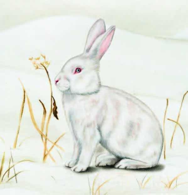 Зайка зимой картинка рисунок