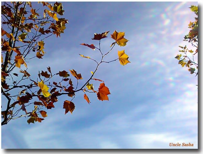 блюз опадающих листьев картинки зачем выяснять, просто
