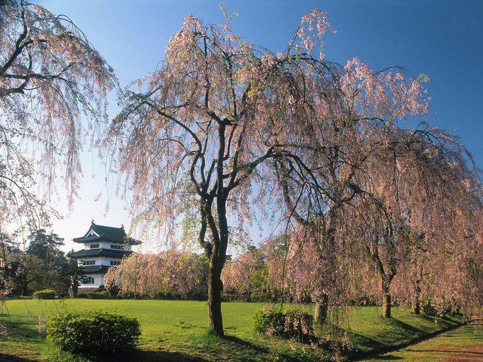 Картинка, Замок Хиросаки, картинки и обои, поменять рабочий стол.
