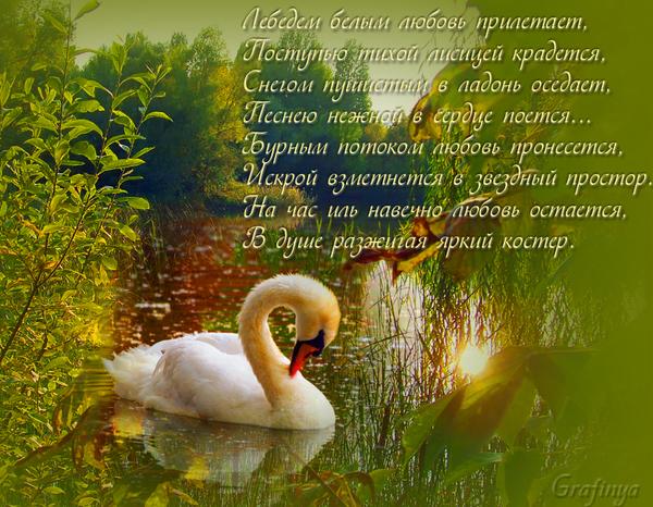 Поздравление на день рождение о лебедях