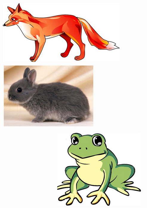 реферат класс млекопитающие