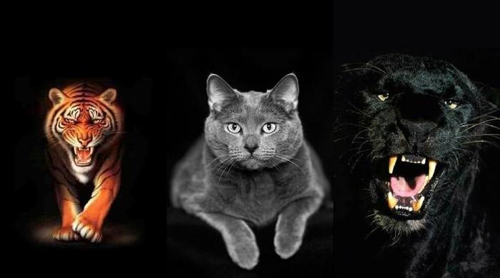 Тройные картинки анимации
