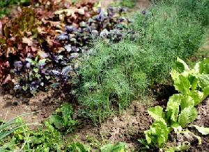 8 трав, которые можно вырастить на кухонном подоконнике 31