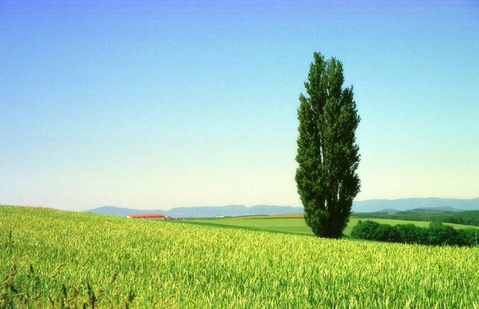 Картинки по запросу деревья водолеев