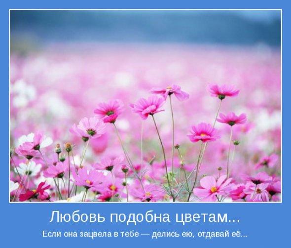 1297800762_motivatory_11 (590x502, 45Kb)