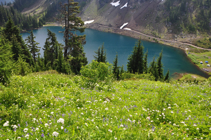Flowers decorate the hillside above the upper Twin Lake. Mt Baker Wilderness, Washington. (700x464, 203Kb)