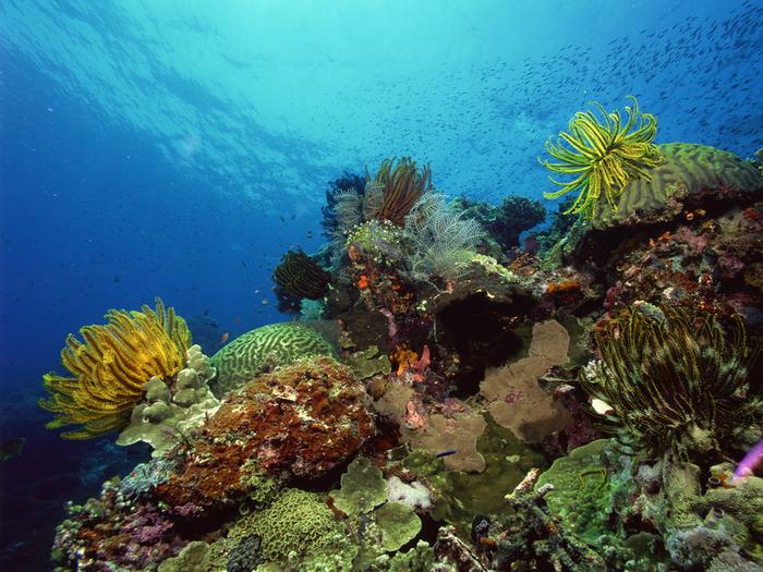Подводный мир (40 фото)