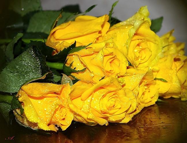 Открытка желтая роза