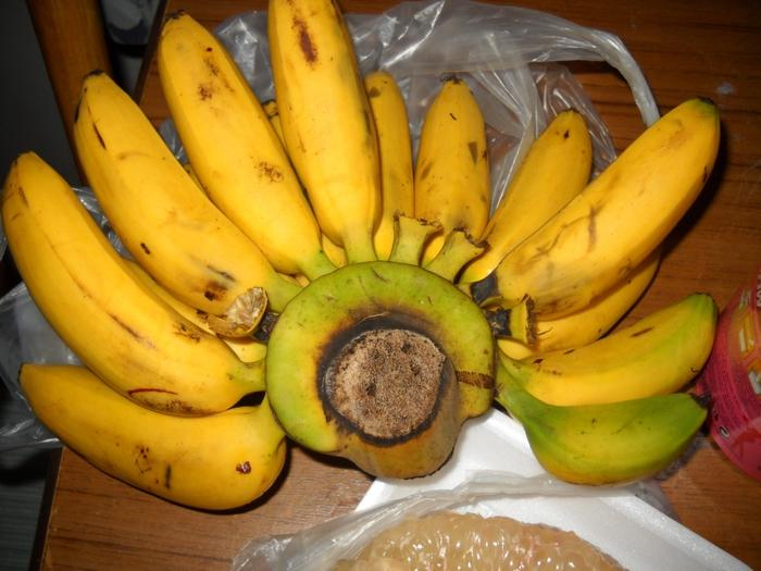 трудилась как выглядит настоящий банан фото самом диване нет