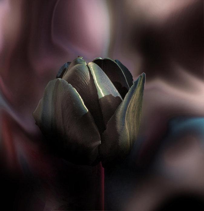 Ночь эротика черный тюльпан широкими бедрами голая