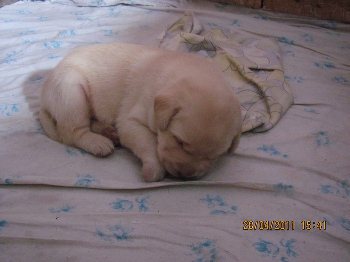 Очередной отчет о Санте и ее щенках IMG_0305 (700x525, 72Kb)