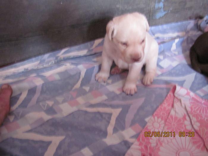 Очередной отчет о Санте и ее щенках IMG_0328 (700x525, 71Kb)