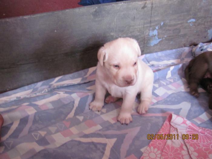 Очередной отчет о Санте и ее щенках IMG_0330 (700x525, 78Kb)