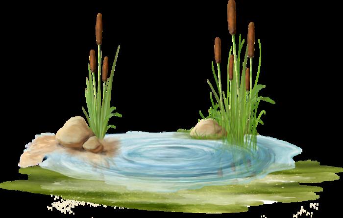 Камыши колосья трава клипарт в Png Обсуждение на