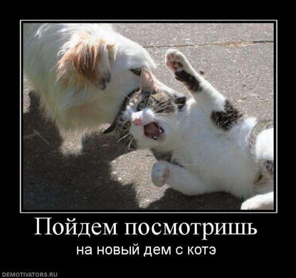 935150c00a799bb5e97c88be602_prev.jpg собака с кошкой (590x554, 45Kb)