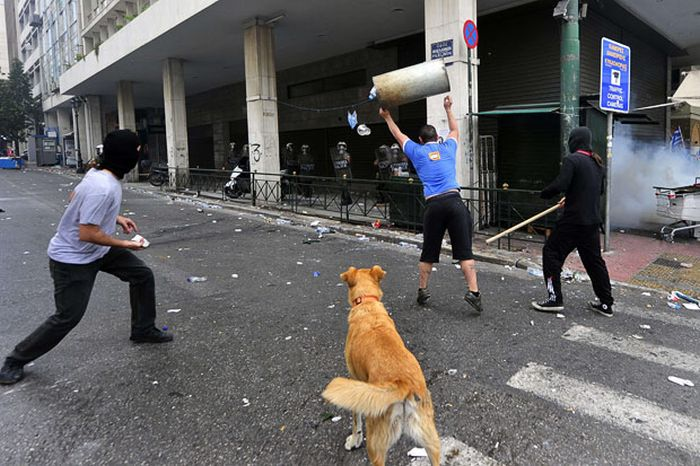 Колбаса возвращается! Знаменитая собака демонстрака, которая участвует во всех протестах Греции