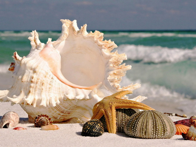 3085196_sea_treasures_1 (670x503, 93Kb)