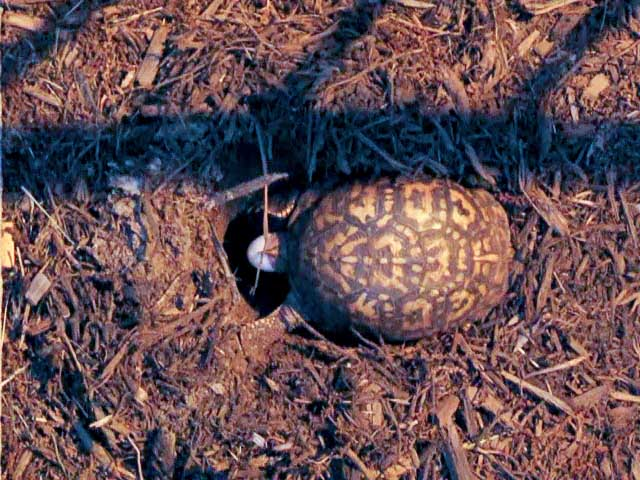 Turtle-Eggs-2-1m (640x480, 113Kb)