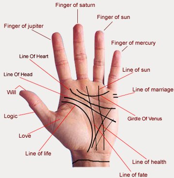 14-lines_of_palmistry (360x367, 25Kb)