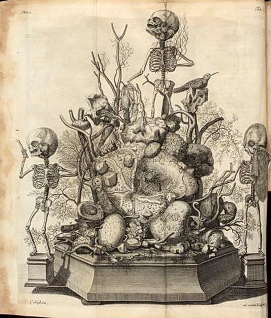 Анатомические гравюры 16-19 века. Обсуждение на