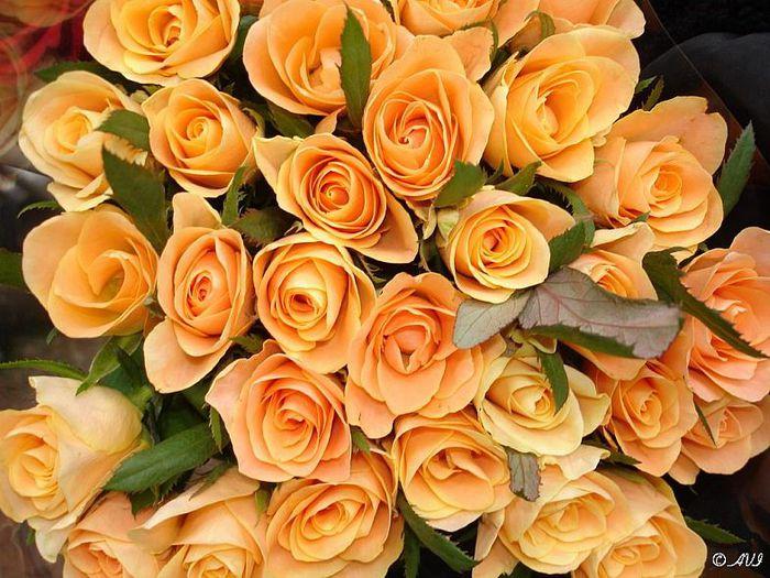 Картинки цветы ларисе, медовым